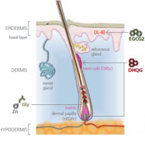 Redensyl para el cabello   Usos y efectos secundarios