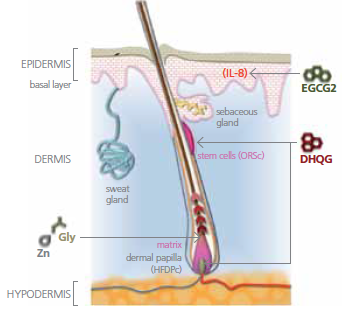 Redensyl para el cabello | Usos y efectos secundarios